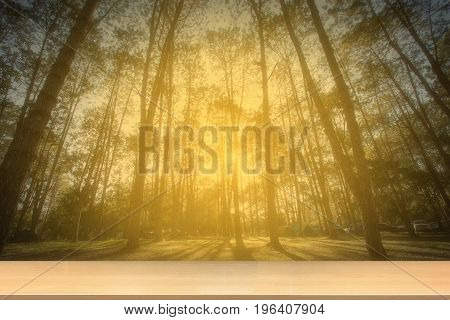 Forrest At The Sunlight  With Perspective Wood