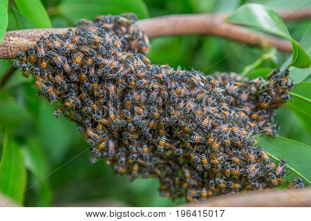 When bees lose their queen they'll wait together in one spot. This is a group of bees that were lost.