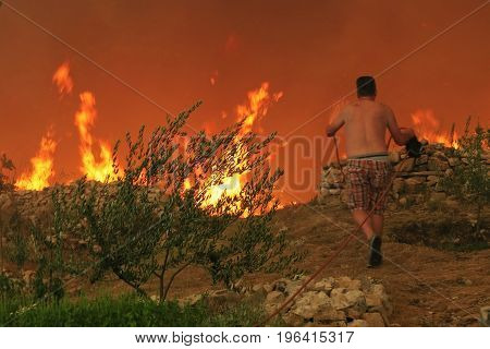Zrnovnica Split Croatia - July 17 2017: Man saving the olive tree during the massive wildfire burning down the forest and villages around city Split