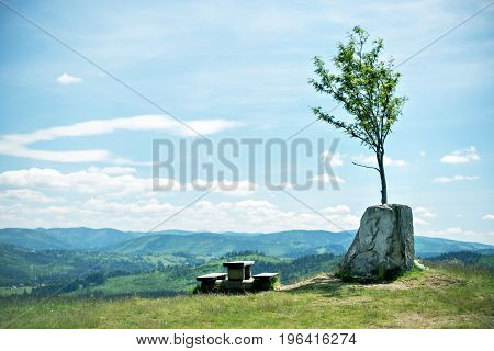 lonely tree grown up in stone with a bench on a mountainside and Mountain view panorama