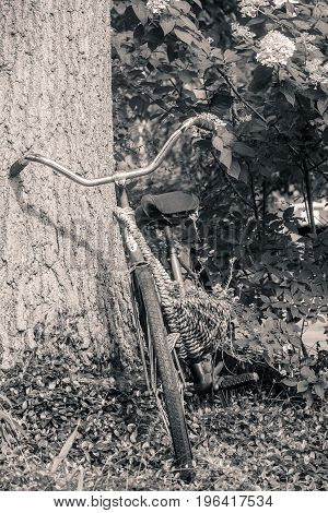 Black and white of old bike up against a large tree trunk.