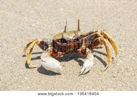 A small crab on a sandy beach