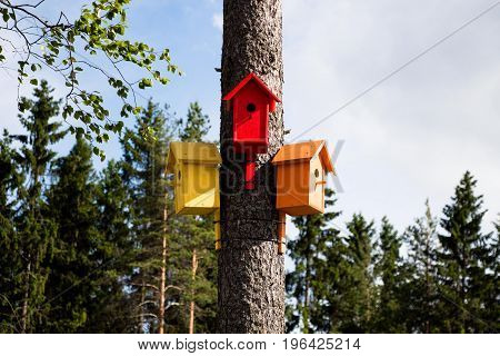 In the forest, very close to the city, in a small park, freelancers made and hung over several trees such remarkable and colorful houses for birds.