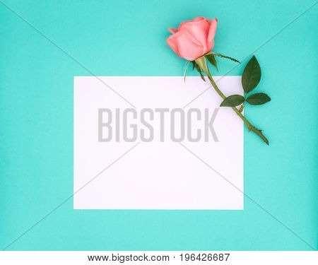 Top view image of white notepad paper for sample text and pink beautiful rose flower on green background Pastel colors Copy space
