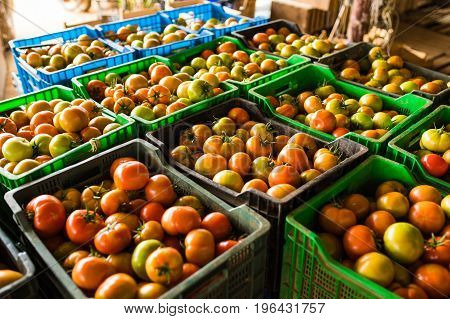 Boxes Full Of Fresh Tomato Vegetables  For Market At Retail