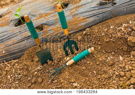 Transplant Of A Tree And Garden Tools On A White Background Concept For Environment Conservation