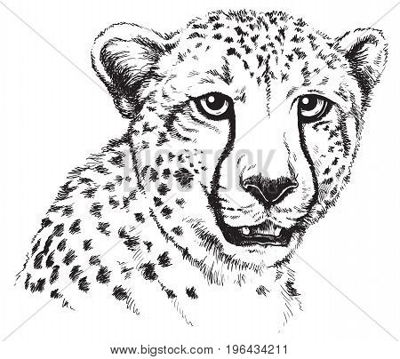 Black and white vector line drawing of a Cheetah's face