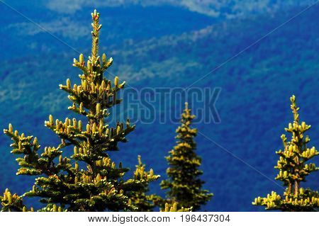 Canadian tree tops from a big Regional Park: Massif Du Sud, Quebec, Canada.