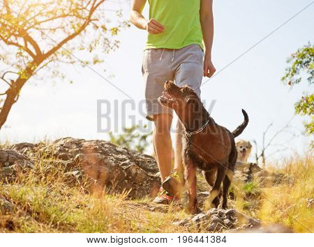Young man with his dog walking outdoor during summer day.