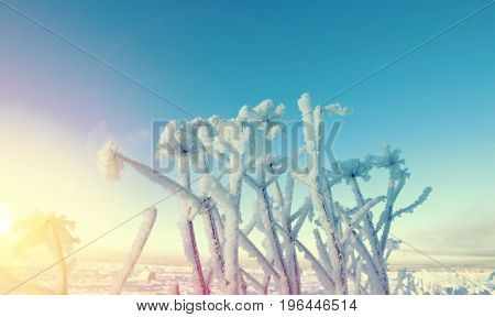 Winter landscape.Frozenned flower. Shallow depth-of-field frozen landscape,