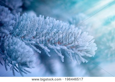 frozen outdoor , Winter landscape. Frozenned flower.