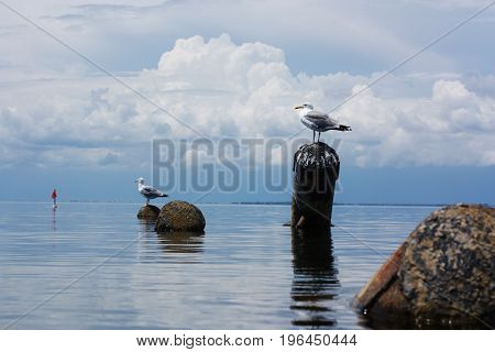 Gulls on a log in the sea.