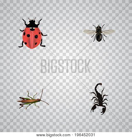 Realistic Poisonous, Midge, Locust And Other Vector Elements
