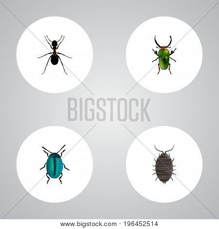Realistic Dor, Bug, Insect And Other Vector Elements