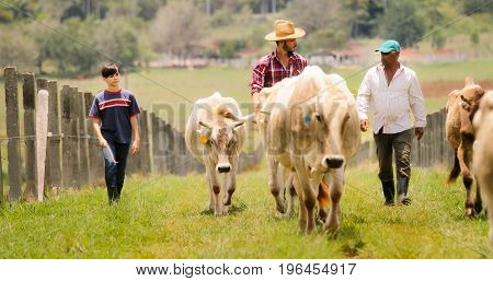 Grandfather Father Child Pasturing Cows In Family Ranch