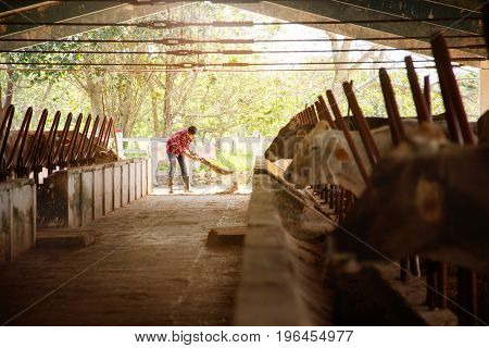 Man Cleaning Farm Farmer Sweeping Stables People In Ranch