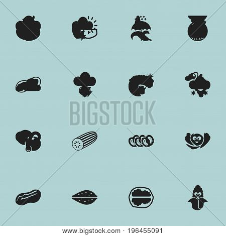 Set Of 16 Editable Vegetable Icons. Includes Symbols Such As Pistachio, Almond, Garnet And More