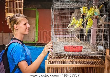 Girl looking at yellow parrots for sale in a livestock market in Yogyakarta, Java, Indonesia