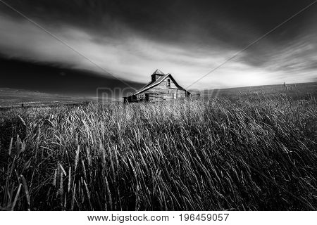 Abandoned farm building sitting in a tall grass field on a farm in Washington state
