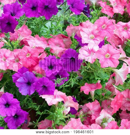 Blooming colorful flowers in filled frame format