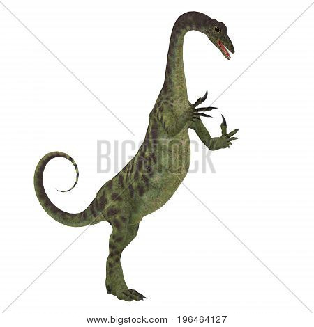 Anchisaurus Dinosaur on White 3d illustration - Anchisaurus was a omnivorous prosauropod dinosaur that lived in the Jurassic Periods of North America Europe and Africa.