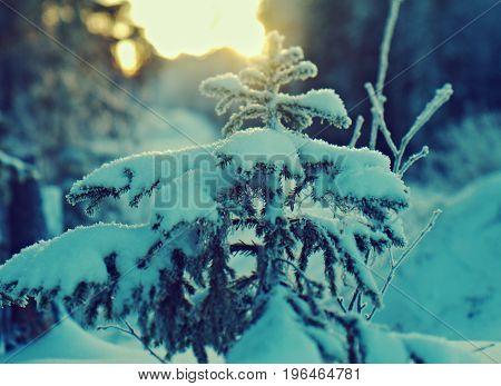 Winter christmas landscape. frozen taiga forest scene