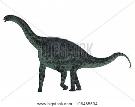 Cetiosaurus Dinosaur Side Profile 3d illustration - Cetiosaurus was a herbivorous sauropod dinosaur that lived in Morocco Africa in the Jurassic Period.