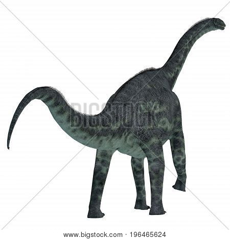 Cetiosaurus Dinosaur Tail 3d illustration - Cetiosaurus was a herbivorous sauropod dinosaur that lived in Morocco Africa in the Jurassic Period.
