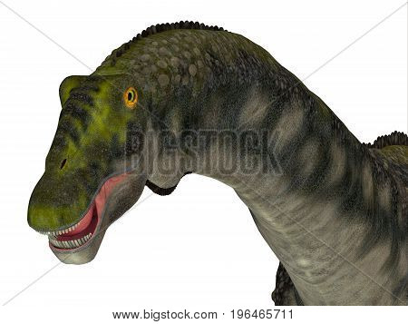 Diamantinasaurus Dinosaur Head 3d illustration - Diamantinasaurus was a herbivorous sauropod dinosaur that lived in Australia during the Cretaceous Period.