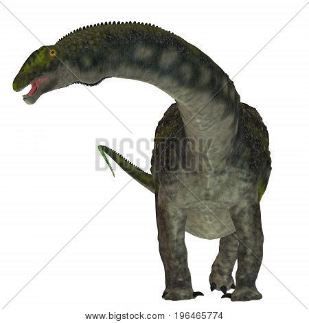 Diamantinasaurus Dinosaur on White 3d illustration - Diamantinasaurus was a herbivorous sauropod dinosaur that lived in Australia during the Cretaceous Period.