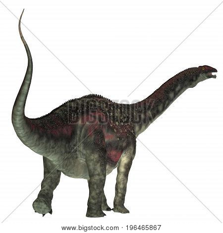 Diamantinasaurus Dinosaur Tail 3d illustration - Diamantinasaurus was a herbivorous sauropod dinosaur that lived in Australia during the Cretaceous Period.