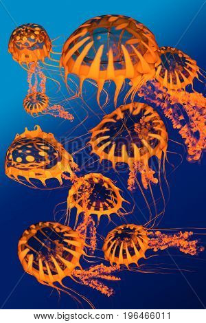 Golden Jellyfish Dance 3d illustration - A group of golden jellyfish dance around each other in blue ocean surface waters.