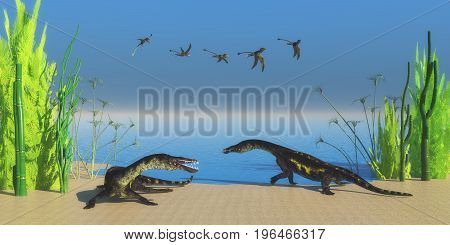 Nothosaurus Reptile Beach 3d illustration - A flock of Peteinosaurus flying reptiles watch as two Nothosaurus dinosaurs growl at each other on a Triassic beach.