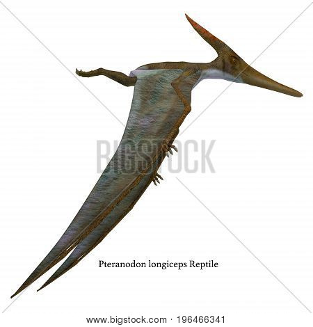 Pteranodon Reptile Side Profile with Font 3d illustration - Pteranodon was a flying carnivorous reptile that lived in North America in the Cretaceous Period.