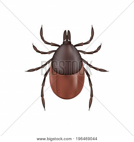 A photo realistic illustration of a deer tick isolated on a white background. Vector EPS 10 available.