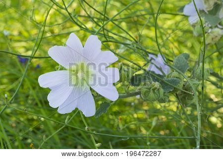 white flowers on fields close up composition photograph
