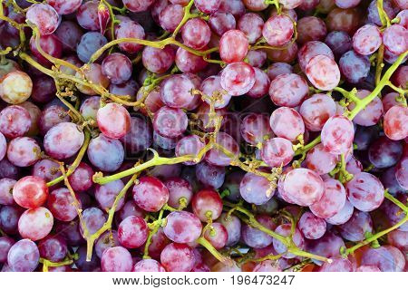 Close-up purple grapes from farm. Abstract texture background.
