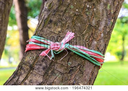 Rope tied to a tree by plantershe mark for setting.