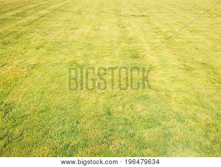 Grass.Green. Grass Background. Natural green grass texture Natural green grass background for design with copy space for text or image