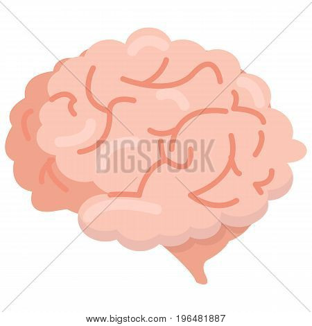 Human brain organ icon, vector illustration flat style design isolated on white. Colorful graphics