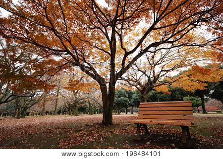 bench wood under autumn trees in park