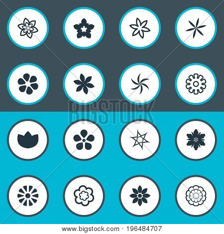 Elements Fuji, Daisy, Narcissus And Other Synonyms Chrysanthemums, Daisy And Blossoming. Vector Illustration Set Of Simple Flower Icons.