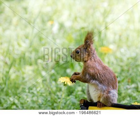 Funny Little Squirrel Sitting On Bag Against Blurred Green Grass Background