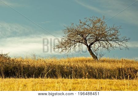 Alone tree on meadow on blue sky background