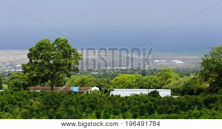 Looking Down At Kona Coffee Plantation From Mamalahoa Highway