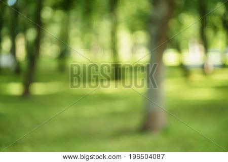 abstract blurred background of trees in park in sunny summer day, real lens blur