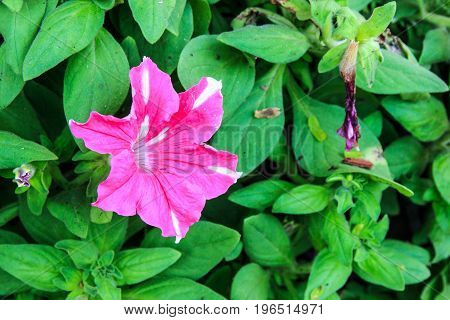 Scientific name Hibiscus spp and hybrid it feel fresh and Peaceful