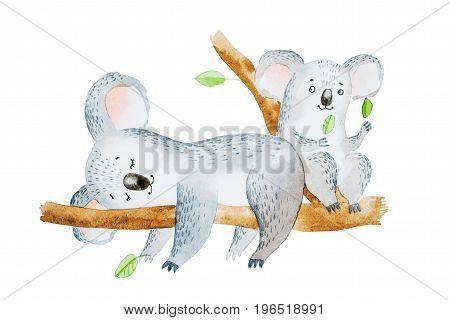 Watercolor illustration of two adorable cartoon koala bears sitting on eucalyptus tree branch.