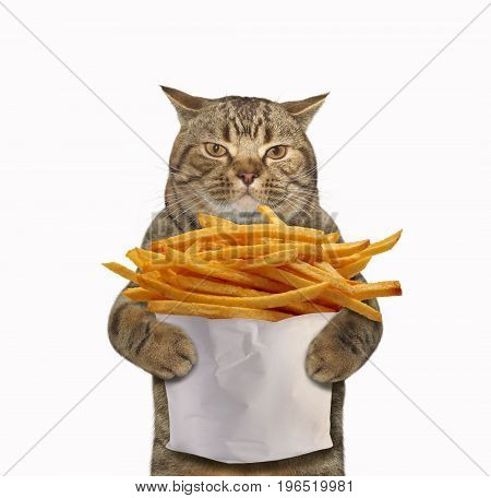 The cat is holding a big paper bag of fried potatoes. White background.