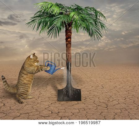 The cat agronomist grew a palm tree from a shovel in the desert.